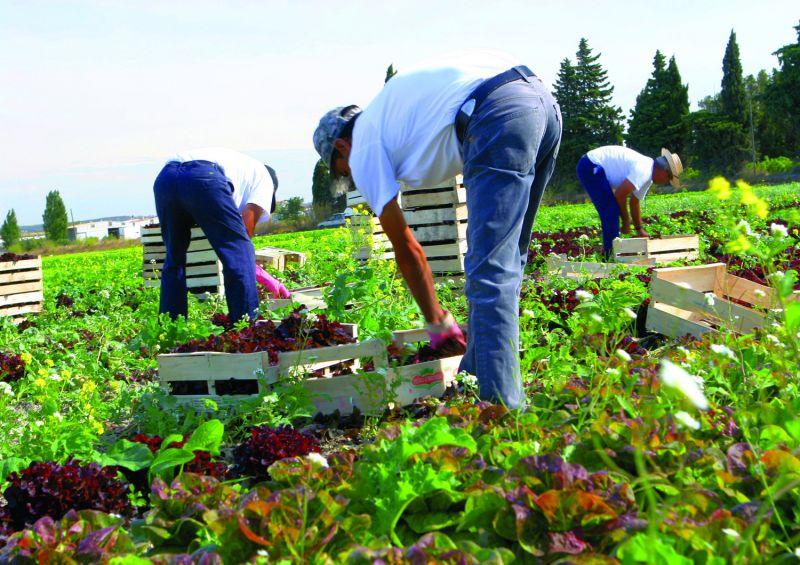Amazing experience of gardening in amazing weather.