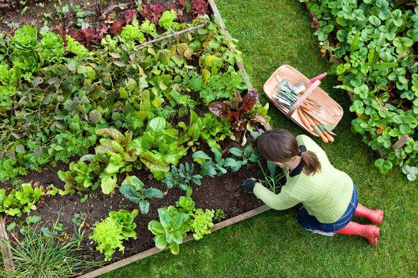 Good arrangement for planting small plants.